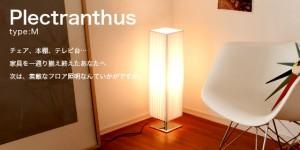 Plectranthus (プレクトランサス) type:M