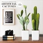 人工多肉植物 ARTIFICIAL CACTUSES(アーティフィシャル カクタシーズ)