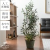 人工観葉植物 Olive tree Grass Bucket(オリーブツリーグラスバスケット)|観葉植物・ 光触媒