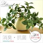 卓上サイズ人工観葉植物