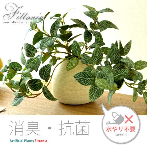 光触媒 人工観葉植物 Fittonia 〔フィットニア〕